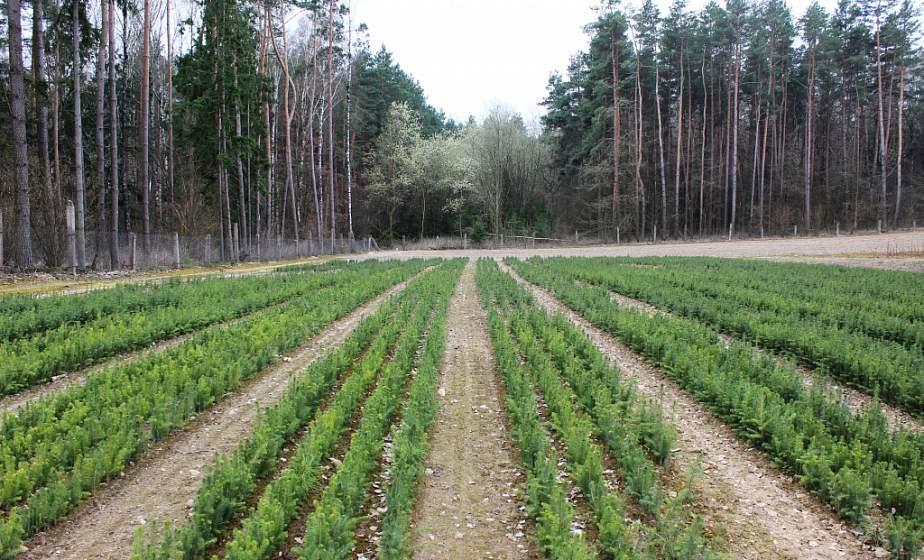 Дубы, сосны, ясени и лиственницы высадят на Гродненщине во время «Недели леса» с 28 марта по 4 апреля. Что думают гродненцы об экологической акции? (+видео)